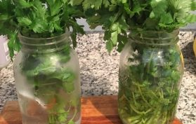 preserve your herbs